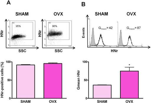 Ovariectomy increases anterior pituitary HNr expression.Dispersed anterior pituitary cells from SHAM and OVX rats were immunostained for HNr and analyzed by flow cytometry. Each column represents the mean ± SE (n = 4 animals per group) of (A) the percentage of HNr-positive cells, and (B) the fluorescence intensity of HNr staining (Gmean). The upper panels show representative dot plots and histograms of HNr expression in anterior pituitary cells from SHAM and OVX rats. *p<0.05, Student's t test.