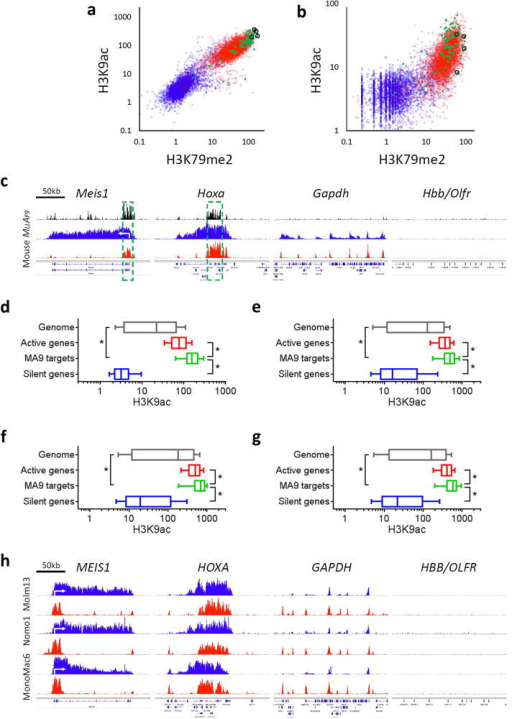 Unique H3K9 epigenomic signature at MLL-AF9 bound gene loci in MLL-fusion leukemia. (a,b) Scatterplots showing ChIP-seq signals for H3K79me2 (x-axis) and H3K9ac (y-axis) in mouse (a) MLL-AF9 leukemic cells, and (b) LSK cells sorted from normal mouse bone marrow. Hoxa cluster genes and Meis1 are highlighted in black circles. (c,h) Screen shots showing ChIP-seq profiles of MLL-AF9 fusion protein (black), H3K79me2 (blue) and H3K9ac (red) at select MLL-AF9 bound target (HOXA cluster and MEIS1), active gene (GAPDH) and silent gene (HBB/OLFR) loci in (c) mouse and (h) human MLL-AF9 leukemic cell lines. The core occupied regions for MLL-AF9 fusion protein in mouse MLL-AF9 leukemia are highlighted (c; green-dashed box). (d–g) Boxplots showing ChIP-seq signal of H3K9ac in (d) mouse and (e–g) human MLL-AF9 leukemic cells including (e) Molm13, (f) Nomo1 and (g) MonoMac6 cells. (a,b,d–g) Data showing ChIP-seq signals of H3K79me2 or H3K9ac at TSS ± 2 kb regions of genome (gray; 18,240 genes), active genes (red; 4,560 genes), MLL-AF9 targets (green; 129 genes) and silent genes (blue; 4,560 genes). (d–g) Data represent mean ± s.d. *P < 0.001 to MLL-AF9 targets using Welch's t-test.