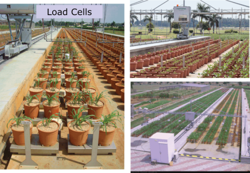 Phenotyping platform—LeasyScan. Scanner support device with eight scanners (PlantEyeR) can assess the information from 3200/4800 sectors (60×60/60×40cm – a sector represents a replication unit and encompasses two pots) in 2h intervals with standard speed 50mm s-1; The platform length is 129.5 m and allows assessment of plant height, canopy size (3D area, projected leaf area) and canopy structure parameters (leaf angle).
