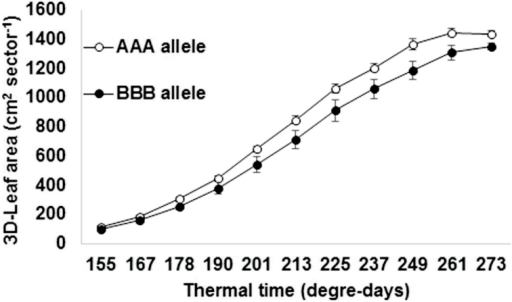 3D leaf area development dynamics within a 12 d period covering the 155–273 degree-days thermal time in pearl millet fine-mapping recombinants varying in parental allele at three marker loci within the terminal drought tolerance QTL region of linkage group 2 (Yadav et al., 2002) (AAA, recurrent; BBB, QTL donor parent). Each data point for the AAA is the mean (±SE) of 10 lines. Each data point for the BBB is the mean (±SE) of 5 lines.