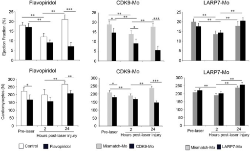 Effects of Cdk9 modulation on the response of the ventricle to laser injury. Cdk9 activity was modulated pharmacologically and genetically by incubation in 3 μmol/l flavopiridol and injection of Cdk9- and Larp7-targeting morpholinos (appropriate mismatch controls, grey bars; Cdk9-Mo-SB or Larp7-Mo-SB, dark bars) prior to injury. Laser injury (single pulse to the mid-ventricular cavity) was performed at 72 hpf. Ejection fraction and cardiomyocyte number were assessed pre-laser, and 2 and 24 h post-laser injury (n=3 experiments, n>10 embryos per experiment, two-way ANOVA test followed by Bonferroni's post-hoc test; *P<0.05, **P<0.01, ***P<0.001). Means±s.e.m. are shown in each figure.