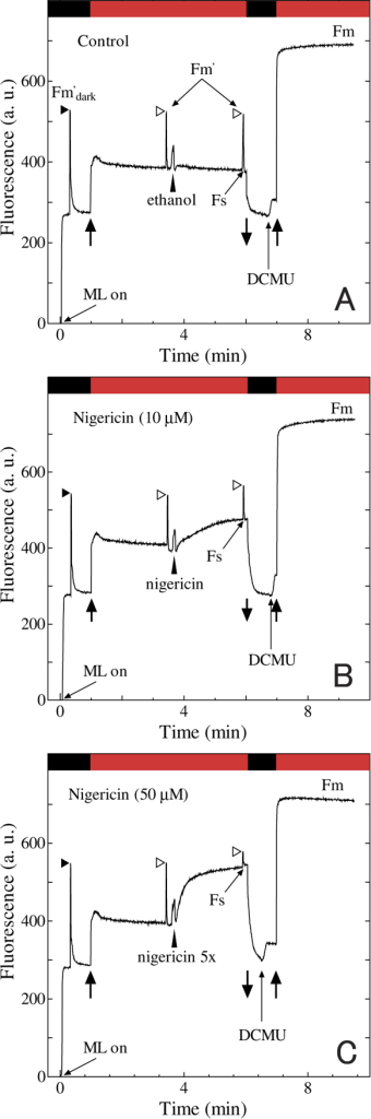 The effect of ionophore (nigericin) on chlorophyll fluorescence kinetics.After 2.5 min from turning on of red actinic light (solid upward arrow), saturating light was applied to obtain first Fm'. Soon after, ethanol for mock control (A) or nigericin (final concentration at 10 μM in the panel B experiment or at 50 μM in the panel C experiment) was added. After the level of fluorescence settled down to the steady state (Fs), saturating light was applied to obtain second Fm'. Then, red actinic light temporary turned off (solid downward arrow), and DCMU was added (thin upward arrow). Finally, red actinic light was turned on again and bring the cells to State 1 for the determination of Fm.