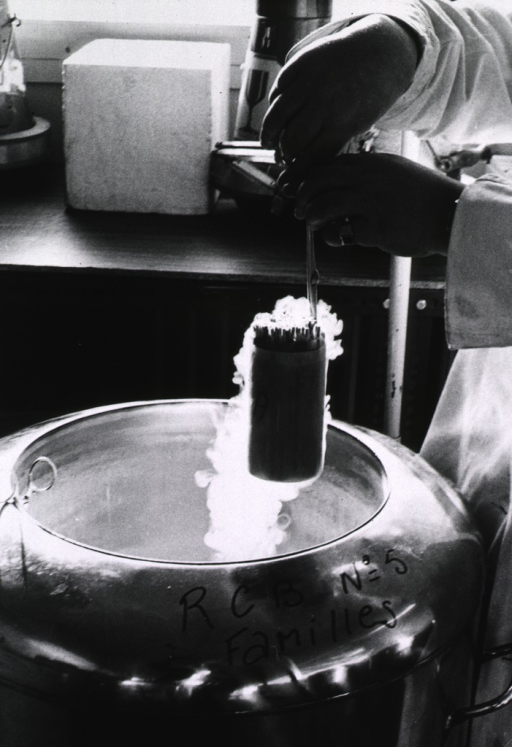 <p>Interior view: a technician is removing a small canister of tissues from a large container of liquid nitrogen.</p>