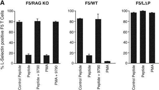 MMP-dependent shedding of L-selectin after TCR engagement regulates entry into PLNs. (A) PLN lymphocytes from F5/RAG-1 KO, F5/WT, and F5/LΔP mice were incubated with 0.1 μm cognate NP-68 or control peptide or 300 nM PMA at 37°C for 60 min in the absence and presence of 30 μM Ro31-9790. L-Selectin expression on F5-positive CD8 T cells was determined by flow cytometric analysis of dual-stained cells. Results are pooled from at least three independent experiments and are the mean percentage of F5 T cells expressing L-selectin ± SE. (B) CFSE-labeled PLN lymphocytes from F5/WT mice were incubated with 0.1 μM NP-68 peptide at 37°C for 60 min, mixed with equal numbers of either naive WT or NP68-activated LΔP lymphocytes labeled with CMTMR, and injected into RAG-1 KO mice. The percentages of immigrant CFSE- and CMTMR-labeled cells in PLNs after 60 min are shown on the dot plots. Representative data from a single experiment are shown. (C) PLN lymphocytes from F5/WT and F5/LΔP mice were incubated with or without NP-68 peptide and peptide removed by washing. In some experiments, Ro31-9790 was included during antigen activation to inhibit L-selectin shedding and removed before trafficking experiments. The lymphocyte populations to be compared were labeled with either CFSE or CMTMR and equal numbers injected into RAG-1 KO mice. After 60 min, the numbers of labeled cells in PLNs, spleen, and blood were measured by flow cytometry. The normalized ratio of CFSE/CMTMR-labeled cells in each organ was calculated as described in Materials and Methods. Results show mean localization ratios ± SE as follows: activated WT, naive F5/WT (black bars, n = 7); activated F5/WT, activated F5/LΔP (light gray bars, n = 7); activated F5/WT, activated F5/WT in the presence Ro31-9790 (white bars, n = 4); and activated LΔP, naive F5/LΔP (dark gray bars, n = 5). *, P < 0.05. **, P < 0.001.