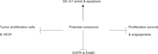 Representation of concomitant molecular changes after combination treatment with a potential compound: Combination therapies with agents that target endothelial cells to block angiogenesis, EGFR/ERBB2, and histone deacetylase inhibitors to prevent tumor adaptation in cancer treatment warrants experimental studies.Abbreviations: EGFR, epidermal growth factor receptor; ErbB2, epidermal receptor growth factor 2; VEGF, vascular endothelial growth factor.