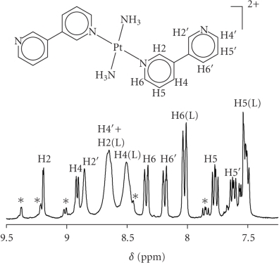 1H NMR spectrum of mixture of trans-[Pt(NH3)2(D2O)2]2+ and 3,3′-bpy (L) in ratio 1 : 10 after 2 d, 50°C, D2O, pD = 6.65. Main resonances are assigned to 1 : 2 complex and free ligand; minor resonances (*) are not assigned.