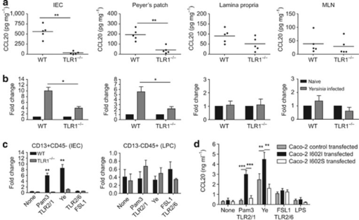 CCL20 is secreted in a Toll-like receptor 1 (TLR1)-dependent manner from intestinal cells. Levels of CCL20 protein (a) and messenger RNA (mRNA; b) from various mucosal tissues 3 days after oral Y. enterocolitica infection. Data are pooled from two independent experiments (n=4–6 mice per group). (c) Levels of CCL20 mRNA in intestinal epithelial cells (IECs; CD13+CD45-) and lamina propria immune cells (LPCs; CD13-CD45+) sorted from wild-type (WT) and TLR1−/− mice. Purified cells were stimulated with TLR2/1 ligand, TLR2/6 ligand, and Y. enterocolitica (Ye). Data are the average from three to four individual mice. (d) Level of CCL20 from Caco-2 cells transfected with control vector (control), WT TLR1 (I602I), or TLR1 containing a single-nucleotide polymorphism (I602S) 18 h after stimulation with TLR ligands or Y. enterocolitica lysate (Ye). Data are pooled from three independent experiments. (n=6). *P<0.05, **P<0.01, ***P<0.001. Student's unpaired t-test. MLN, mesenteric lymph node.