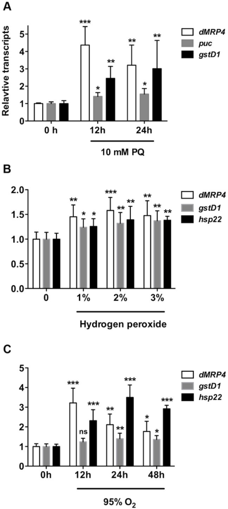 dMRP4 is up-regulated in response to oxidative stress.(A) Quantitative RT-PCR analyses of RNA isolated from wild-type flies (w1118) after exposed to paraquat (A), hydrogen peroxide (B,) or hyperoxia (C) for indicated times. Data is showed as means ± S.D. from at least 5 independent experiments. One way ANOVA followed by post hoc t-test: * p<0.05, ** p<0.01, *** p<0.001, ns: No significance (p>0.05).