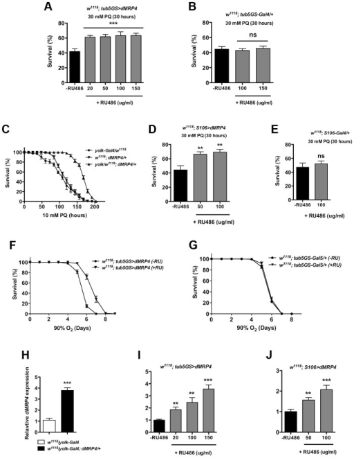 Elevated dMRP4 expression increases oxidative resistance.Overexpression of dMRP4 globally (A and F) or tissue-specifically (C–D), significantly promoted adult fly survival of paraquat (PQ)-induced oxidative stress. Since yolk-Gal4 is expressed specifically in the female fat body, female flies were used in the yolk>dMRP4 experiment (C). Male flies were otherwise used in all other experiments. (H–J) qt-PCR analysis of dMRP4 induction by different Gal4 drivers. Concentrations of paraquat and RU486 used in individual experiment were indicated, except for (F–G) where concentration of RU486 used was 150 ug/ml. Student's t-test was used in (E and F) and ANOVA was used in (D) and (I–J). * p<0.05, ** p<0.01, *** p<0.001. ns: No significance (p>0.05). Sample size: (A) tub5GS>dMRP4[75], n = 160; tub5GS>dMRP4 (+RU), n = 180; (B) tub5GS-Gal4/+[75], n = 160; tub5GS-Gal4/+ (+RU), n = 160; (C) yolk-Gal4/w1118, n = 160; dMRP4/+, n = 160; yolk-Gal4/w1118; dMRP4/+, n = 160; (D) S106>dMRP4[75], n = 180; S106>dMRP4 (+RU), n = 180; (E) S106-Gal4/+[75], n = 160; S106-Gal4/+ (+RU), n = 160. (F) tub5GS>dMRP4[75], n = 200; tub5GS>dMRP4 (+RU), n = 200; (G) tub5GS-Gal4/+[75], n = 200; tub5GS-Gal4/+ (+RU), n = 180.