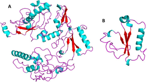PBF tertiary structure predicted with the Robbeta server. A) PBF predicted 3D structure showing long coils in magenta, interrupted by short alpha helices in blue, and beta sheets in red. B) The 3D structure at amino acid residues 216–301, showing the putative zinc finger domain.