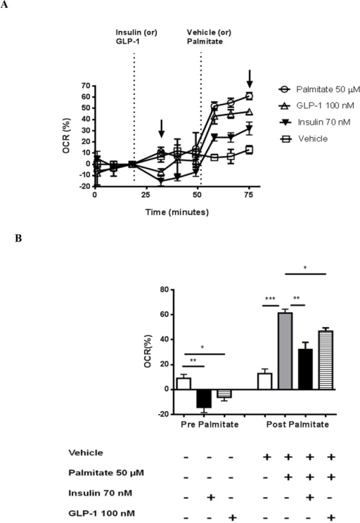 Effect of fatty acid oxidation on GLP-1 induced oxygen consumption in cultured CMs.OCR changes following stimulation with 100 nM GLP-1 (maximal effective dose) or 70 nM insulin are presented following palmitate challenge. GLP-1 or insulin was injected at 21 min and Vehicle (bovine serum albumin) or Palmitate was injected at 52 min following initiation of data collection. The responses are presented as percentage changes in OCR before and after Vehicle or Palmitate injection (A). Quantitation of percentage changes before (left bars; first arrow in panel A) and after (right bars; second arrow in Panel A) Palmitate or Vehicle challenge (B). Data are presented as mean ±SEM of 3–4 replicates per treatment. *p<0.05, **p<0.01, ***p<0.001.