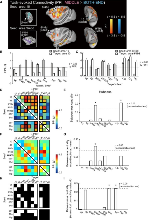 Hub-centric cortical network for temporal-order judgment.(A) PPI (MIDDLE > BOTH-END). Color t-map of PPI is superimposed on the inflated brain. Upper and lower panels show the PPI maps for the seeds in areas 10 and 9/46d, respectively. (B, C) Two bar plots in each column show z-values for PPIs from area 10 (B) or area 9/46d (C) to other ipsilateral homotopic areas (gray) and PPIs from other homotopic areas to area 10 (B) or area 9/46d (C) (white). Dashed lines indicate significant z-value (p = 0.05 [FDR correction]). * p < 0.05 (FDR correction). (D) PPI matrix among the ten homotopic areas. Rows and columns indicate seed and target areas, respectively. Significant connectivities are enclosed by thick black lines (p < 0.05 [FDR correction]). (E) Betweenness centralities of each area calculated based on (D). The dashed line indicates the significance at p = 0.05 (randomization test [comparison with the distribution of the randomized network]). * p < 0.05. (F) PPI matrix among the ten homotopic areas without assumptions of directionality. The weight of the connection between A and B is evaluated as the mean value of PPIA->B and PPIB->A. (G) Betweenness centralities of each area calculated based on (F). The dashed line indicates significance at p = 0.05 (randomization test). * p < 0.05. (H) Anatomical connectivity matrix among the ten homotopic areas. Rows and columns indicate seed and target areas, respectively. A white (black) square indicates the presence (absence) of anatomical connection from row to column. Anatomical information is based on the CoCoMac database [41,47,48]. The projections to/from areas 8Ad, SEF, and LIP listed in the matrix are categorized as those to/from areas 8A, 6DR, and POa in CoCoMac, respectively. (I) Betweenness centralities of each area calculated based on (H). The dashed line indicates significance at p = 0.05 (randomization test). * p < 0.05.