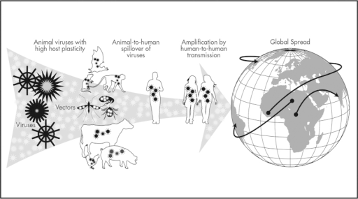 Pandemic properties of zoonotic viruses that spill over from animals to humans and spread by secondary transmission among humans.Key characteristics of pandemic potential that were evaluated for associations with viral traits and high-risk disease transmission interfaces include host plasticity, human-to-human transmissibility, and geographic distribution. Human practices that promote transmission of mutation-prone RNA viruses able to infect a wide range of taxonomically diverse hosts, including wild and domestic animals, act synergistically to facilitate viral emergence, particularly for viruses capable of human-to-human transmission and broad geographic spread (map and illustration created using Adobe Illustrator CS6).
