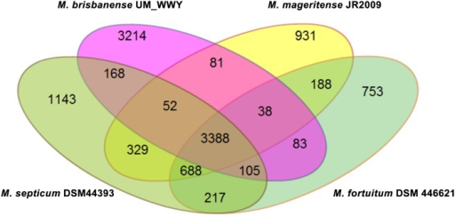 Venn diagram showing the gene distribution of M. fortuitum complex members and UM_WWY.The four genomes shared 3,388 gene clusters and UM_WWY contains the highest number of strain-specific genes.
