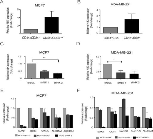 Nuclear factor-kappa B-inducing kinase (NIK) role in the regulation of Cancer stem cell (CSC) population of MCF7 and MDA-MB-231.(A,B) Breast cancer stem cell (BCSC) populations derived from MCF7 and MDA-MB-_231 are enriched in NIK. RT-qPCR analysis demonstrated that NIK is mainly expressed in the BCSC population of MCF7 (A) (n = 3, error bars are +/− s.e.m) and MDAMB231 (B) (n = 2, error bars are +/− s.e.m) cell lines. To knockdown NIK, two short hairpin RNA (shRNA) were used in MCF7 (C) and MDA-MB231 (D) cell lines. (n = 3, error bars are +/− s.e.m, *P < 0.05). (E) The impact of NIK expression over CSC markers levels was evaluated after stable inhibition of NIK in two independent MCF7 replicates. Real Time PCR analysis shows that NIK depletion affects the expression of CSC markers (SOX2, OCT4, ALDH1A3, ALDH8A1). (n = 2, error bars are +/− s.e.m). (F) Effect of NIK inhibition in two independent MDA-MB-231 stable transfected cells lines with shNIK1 or shNIK2. RT-qPCR analysis of markers expression after stable NIK inhibition in MDA-MB-231 cells. All Real Time PCR were normalized to TBP. The level of CSC markers or NIK was designated to 1 for MCF7 or MDA-MB-231 control cells (shLuc). (n = 2, error bars are +/− s.e.m).