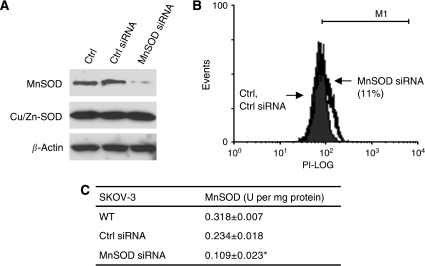 Suppressing manganese superoxide disumutase (MnSOD) expression by small-interfering RNA (siRNA) increases ROS production in SKOV-3. (A) Cells transfected with non-specific control (Ctrl siRNA) or MnSOD siRNA were analysed for expression of MnSOD, Cu/Zn-SOD proteins by western blotting using the respective antibodies. β-Actin serves as a protein-loading control. (B) O2•− level was measured by flow cytometry analysis using dihydroethidium. Solid histogram, untransfected and Ctrl siRNA-transfected cells; open histogram, MnSOD siRNA-transfected cells. (C) MnSOD activity was measured. Values are mean±s.d. of three independent experiments. *P<0.05 vs WT and Neo control cells.