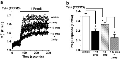 Insensitivity of the progesterone effect to mifepristone. Data were generated by Ca2+ measurement in cells over-expressing TRPM3 (Tet+). (a) Cells were treated with 2 μM mifepristone (mfp) or vehicle for 30 min prior to experiments and mfp was maintained during the recordings. Pre-treatment with 10 μM progesterone (prog) was as described in Fig. 1b, and PregS was applied at 1 μM. (b) Mean data for experiments exemplified in (a), showing the effect of prog alone (+10 prog), mfp alone (+2 mfp), or prog with mfp (+10 prog + 2 mfp) on the PregS-induced response (N/n = 40/5 for each condition).