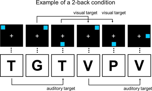 Example of a 2-back condition in the dual n-back task that was used as the training task. The visual and auditory stimuli are presented simultaneously at identical rates. Figure adapted from Buschkuehl and colleagues (2007).
