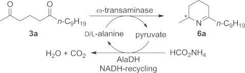 Monoamination of diketone 3a to yield Δ1-piperideine 6a. Reagents and conditions: lyophilised E. coli cells containing the overexpressed ω-TA (20 mg), diketone 3a (12 mg, 50 mm), PLP (1 mm), NAD+ (1 mm), ammonium formate (150 mm), D- or L-alanine (500 mm), AlaDH (12 U), FDH (11 U), organic cosolvent and KPi buffer (100 mm, pH 7.0), 30 °C, 24 h in an Eppendorf orbital shaker (700 rpm).