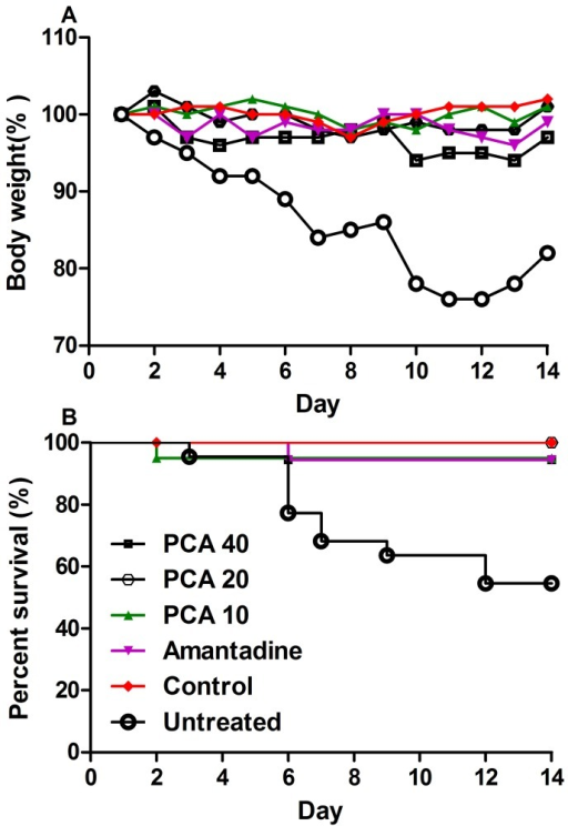 Therapeutic efficacy of protocatechuic acid (PCA) in mice infected with influenza virus A/Chicken/Hebei/4/2008(H9N2).(A) The assessment of mouse body weight post administration with PCA or amantadine hydrochloride as compared to the untreated or control animals; (B) The mice survival rate post administration with 10, 20 and 40 mg/kg of PCA or 50 mg/kg of amantadine hydrochloride twice daily by oral gavages at 12 h intervals for 7 days. The untreated group was inoculated with H9N2 virus without any medication.