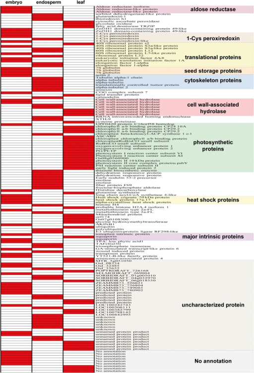 Expression profile of top 50 expressed genes in the three tissues. The colors denote absence (white) and presence (red) of a particular gene transcript. Photosynthetic genes are almost exclusively found in the leaf transcriptome. Seed storage (7S globulin) and heat shock proteins are prominent in the embryo. Translational and cytoskeleton proteins are abundant in embryo and in endosperm, but rarely found in leaf. Cell wall–associated hydrolase and major intrinsic proteins are evenly distributed in three tissues. Uncharacterized proteins exist in all three tissues, but unigenes without matched sequences in GenBank are found only in embryo and in leaf, not in endosperm.