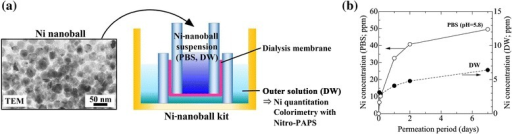In vitroNi release from Ni-nanoball suspensions through a dialysis membrane. Experimental setup (a) and time-dependent release of Ni (b).