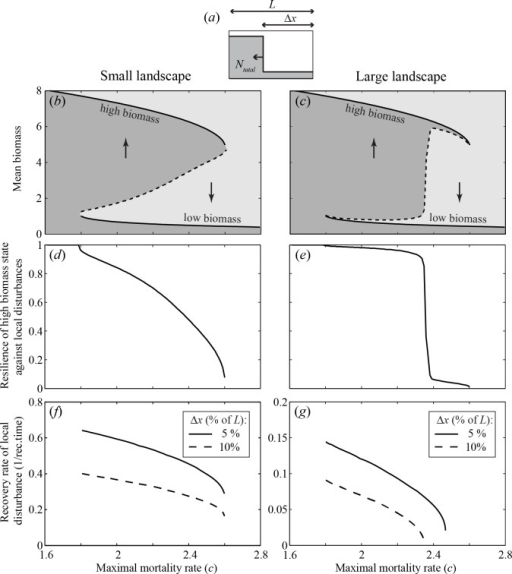 Resilience to local disturbances on a small and a large landscape.(a) Local disturbances to the alternative stable state (i.e. the low biomass state) were performed on one side of the landscape, in order to have a symmetrical landscape. (b) Mean biomass on the landscape in equilibrium (Ntotal/L) as a function of the maximal mortality rate for a system on a relatively small landscape (L = 5 m). The solid parts of the curve represent the two stable landscape-wide equilibria. The dashed part of the curve represents the disturbance threshold, i.e. the size of the disturbed patch needed to induce a systemic shift to the alternative stable landscape-wide state. (c) The same as panel b but for a system on a large landscape (L = 50 m). Note that the disturbance threshold remains very close to the less resilient of the two stable equilibria implying that only a small disturbance is needed to induce a shift to the more resilient landscape-wide state. (d) Resilience of the high biomass state, in terms of the fraction of the landscape that needs to be perturbed to the alternative state to trigger a shift (Δx/L), for a system on a small landscape. (e) The same as panel d but for a system on a large landscape. Note that resilience shows a steep drop. (f) Engineering resilience of the high biomass state, in terms of the recovery rate of a local disturbance to the low biomass state for a system on a small landscape. (g) The same as panel f, but for a system on a large landscape.