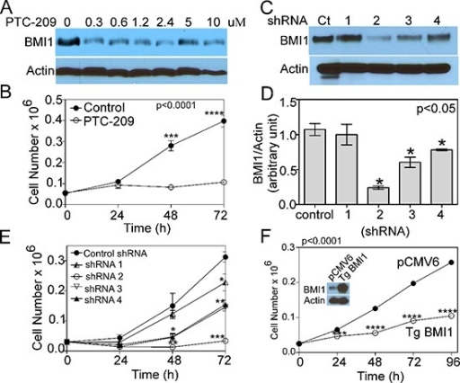 COX4-1 and BMI1 co-expression is required to promote cell proliferation(A) Representative western blot depicting BMI1 expression in nuclear extracts of U251-TgCOX4-1 cell following 24-h PTC-209 treatment (0–10 μM). (B) Cell proliferation in control and PTC-209-treated (5 μM) U251-TgCOX4-1 cells. (C) Representative western blot depicting BMI1 expression in U251-TgCOX4-1 cells expressing shRNA control or one of four different vectors expressing shRNA against BMI1. (D) Quantification of the relative expression levels of BMI1 detected in (C). (E) Cell proliferation in clones expressing shRNA against BMI1. (F) Representative western blot depicting BMI1 expression levels (inset) and the cell proliferation rates of control and pCMV6-BMI1-transfected U251 cells. Graphs represent the average from triplicate determinations from at least three independent experiments.