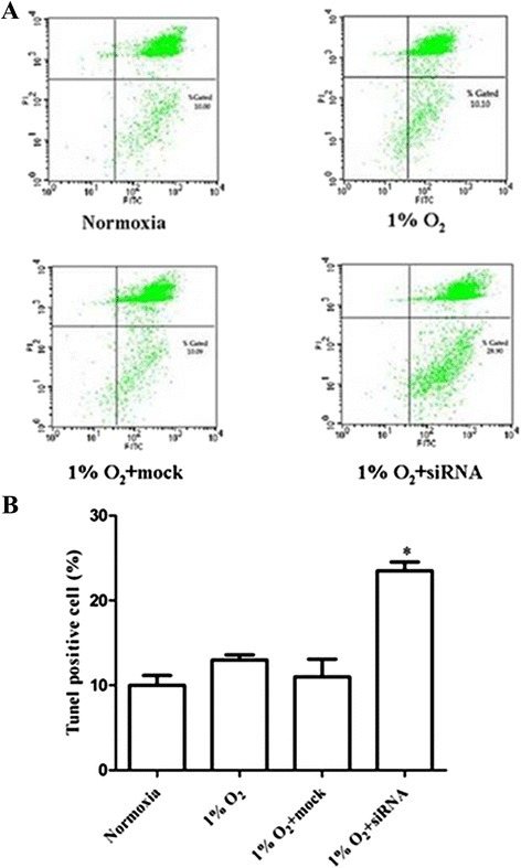 Role of HIF-1α in protecting AtT-20 cells from hypoxia-induced apoptosis. AtT-20 cells were transfected with 10 μM HIF-1α siRNA or mock transfected, and subsequently cultured in hypoxic or normoxic conditions for 12h. (a) Annexin V-FITC and (b) TUNEL assay showed increased apoptosis when cells were transfected with HIF-1α siRNA and subsequently cultured in 1% O2 for 12 h compared with normoxia and mock groups (*P < 0.05 vs.the other groups)