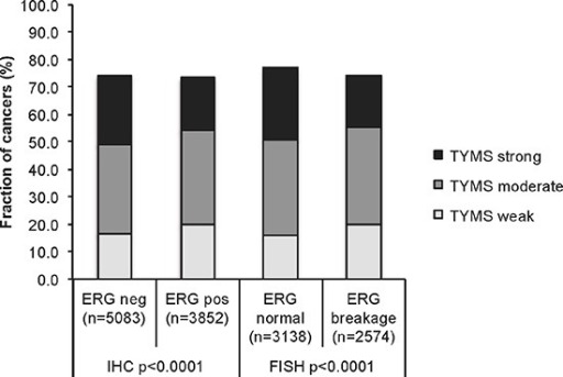 Association between TYMS expression levels and ERG-fusion stateComparison of TYMS expression levels in ERG-positive and ERG-negative prostate cancers. ERG-fusion state was determined either by immunohistochemistry, or by FISH for ERG gene breakage.