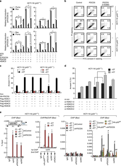 PDCD5 promotes p53-dependent apoptosis via selective inhibition of HDAC3.(a) Overexpression of HDAC3 suppresses the PDCD5-mediated transcription of p53-target genes. Cells were transfected with indicated siRNAs and/or plasmids and treated with either ET or STS. The levels of indicated genes were analysed by real-time PCR. Error bars, s.d. (n=3). *P<0.05. (b) PDCD5 promotes p53-dependent apoptosis in a caspase-3-dependent manner. Cells were transfected with indicated plasmids and treated with ET and/or Z-DQMD. Annexin V-positive cells were assessed by flow cytometry. A representative figure of three independent experiments is shown. (c) HDAC3, but not other class I HDACs tested, selectively antagonizes PDCD5-enhanced apoptosis. Annexin V-positive cells were assessed by flow cytometry. Error bars, s.d. (n=3). *P<0.05. (d) Knockdown of HDAC3 significantly enhances ET-induced apoptosis. Annexin V-positive cells were assessed by flow cytometry. Error bars, s.d. (n=3). *P<0.05; **P<0.01. (e) PDCD5 is required for ET-induced recruitment of the p53–p300 complex to the promoter region of Bax. Cells were transfected with indicated plasmids and/or shPDCD5, and then treated with ET. ChIP and re-ChIP assays were performed with the indicated antibodies. Precipitated samples were analysed by real-time PCR, and results are presented as the percentage of input. Error bars, s.d. (n=3). *P<0.05, **P<0.01 versus without ET; #P<0.05 versus without ET; ##P<0.05 versus ET+HA-p53WT.