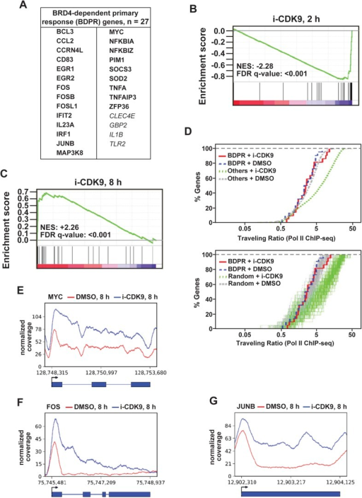 i-CDK9 affects the expression of other BRD4-dependent primary response genes similarly as it does to MYC.(A) The list of 27 curated BRD4-dependent primary response (BDPR) genes identified in bone marrow-derived macrophages is displayed in alphabetical order. The 23 genes in bold face type had detectable Pol II signals in HeLa cells as revealed by ChIP-seq analysis. (B and C) GSEA results for the 27 BDPR genes at 2 hr (B) and 8 hr (C) post CDK9 inhibition. NES: Normalized Enrichment Score; FDR: False Discovery Rate. (D) Distribution of Pol II-bound genes with a given TR as determined by ChIP-seq. The genes are grouped by the indicated gene types and treatment conditions. The top panel compares the 23 BDPR genes to the remaining Pol II-bound genes in the genome, and the bottom compares the BDPR genes to 23 randomly selected genes. (E, F, G) Occupancy of Pol II across three representative BDPR genes as revealed by ChIP-seq. The read coverage is shown for the entire gene plus a margin on either side equal to 7% of the gene length.DOI:http://dx.doi.org/10.7554/eLife.06535.020