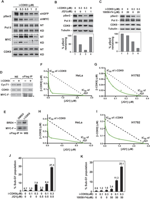 Simultaneous inhibition of CDK9 and MYC synergistically induces growth arrest and apoptosis of cancer cells due to the fact that MYC facilitates P-TEFb phosphorylation of Pol II CTD and increases binding to BRD4-P-TEFb upon CDK9 inhibition.(A) Lysates of HeLa cells expressing the indicated shRNA and exposed to increasing concentrations of i-CDK9 were analyzed by immunoblotting for the indicated proteins. (B and C) Lysates of HeLa cells treated with the indicated drugs and their concentrations were analyzed by immunoblotting, with quantification of the pSer2 signals shown at the bottom. (D and E) Nuclear extracts (NE) of HeLa-based cells expressing MYC-F and untreated (−) or treated with i-CDK9 or DMSO were subjected to anti-Flag immunoprecipitation. The immunoprecipitates (IP) were examined by immunoblotting for the indicated proteins. (F, G, H, and I) HeLa (F and H) and H1792 (G and I) cells were incubated with JQ1 or i-CDK9 alone or together at various concentrations. The concentrations of each drug (IC50), either used as a single agent or in combination, that caused 50% of cells to show growth inhibition in Celltiter-Glo assay (F and G) or produce Caspase 3/7 (H and I) were plotted using the isobologram method. The dotted lines denote the IC50 values of i-CDK9 and JQ1 had the effects of the two compounds been simply additive. (J and K) HeLa cells were treated with the indicated concentrations of i-CDK9 plus JQ1 (J) or i-CDK9 plus 10,058-F4 (K) and measured by flow cytometry for propidium iodide (PI)-stained sub-G1 population. The error bars represent mean ± SD from three independent measurements.DOI:http://dx.doi.org/10.7554/eLife.06535.021