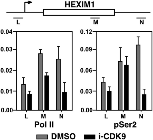 Treatment with i-CDK9 (0.3 μM for 8 hr) decreases the levels of both total Pol II and Pol II with pSer2 CTD at the HEXIM1 locus.DOI:http://dx.doi.org/10.7554/eLife.06535.018