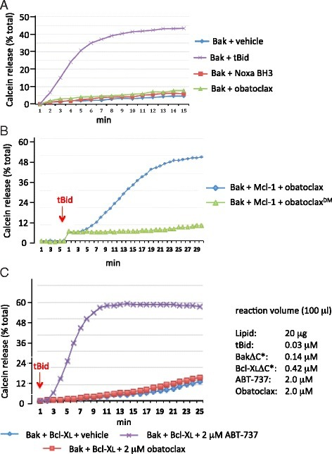 a Bak-dependent release of calcein from proteoliposomes is not activated by obatoclax or Noxa BH3 peptide. Assays ± tBid were conducted as described in Fig. 1d, in the presence of 1 μM obatoclax, Noxa BH3, or vehicle (0.05 % DMSO) alone. b As in Fig. 1d except proteoliposomes contained Bak and Mcl-1 derivatives and the assays conducted in the presence of 1 μM obatoclax or 1 μM des-methoxyl (DM) obatoclax. c As in Fig. 1d except that liposome-anchored Bcl-XL replaced Mcl-1 and ABT-737 was tested. Concentrations of assay constituents are provided in right panel. Shown are representative assays from at least 3 independent experiments