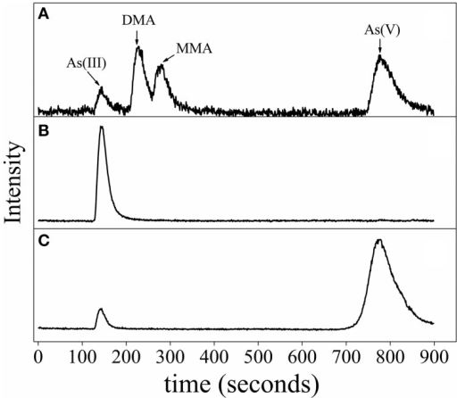 Arsenic speciation of R. palustris CGA009 determined by anion exchange HPLC-ICP-MS. (A) Chromatogram of the standards, including As (III), dimethylarsine (DMA), monomethylarsine (MMA) and As (V). (B) Speciation of arsenic of R. palustris CGA009 grown on 1.0 mM arsenite in the middle-log phase. (C) Speciation of arsenic of R. palustris CGA009 grown on 0.5 mM arsenate in the middle-log phase.