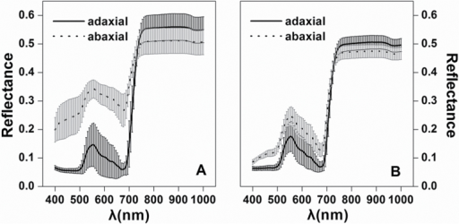 Average (the curves) and standard deviation (the shaded area) of reflectance spectra of adaxial and abaxial leaf surfaces for (A) white poplar (n=55) and (B) Chinese elm (n=60). λ is the wavelength.