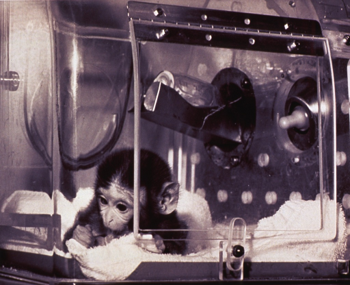 <p>Shows a baby monkey lying on a towel in a clear plastic and metal containment unit.  There are what appear to be two baby bottles in slots in the unit.</p>