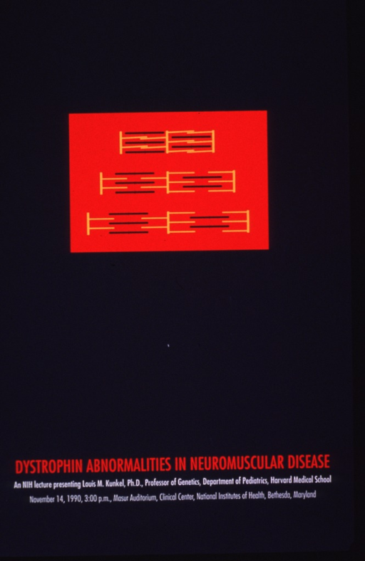 <p>Predominantly gray poster with red and white lettering announcing a lecture given Nov. 1990 by Louis M. Kunkel, Ph.D., prof. of genetics at Harvard Medical School.  Visual image is an abstraction of the myosin and actin filaments of a sarcomere, depicted with yellow and gray rods.  The first iteration shows the rods in a close formation, as in a normal, contracted muscle; they become separated by greater distances in the iterations below.  All text near bottom of poster.</p>