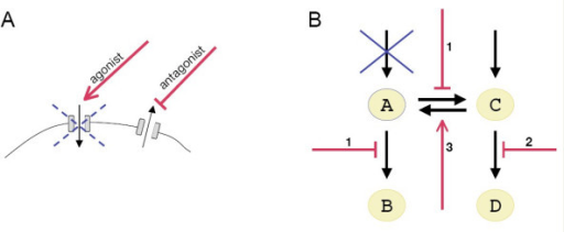 Only a few specific loss-of-function genetic diseases match the concept of a pharmaceutical target. Although the concept of a pharmaceutical target does not fit most loss-of-function diseases, channelopathies and some metabolic diseases are exceptions to the rule. A) Schematic view of putative strategies to treat a partial loss-of-function affecting an ion channel. Agonists may stimulate the channel to increase its activity. Alternatively, antagonists of opposite-effect channels may restore the ion balance of the cell. B) Schematic view of putative strategies to treat a loss-of-function disease affecting an enzyme. In this example, the reduction of enzyme activity (blue cross) results in a deficit in a key metabolite A. This deficit may be compensated by inhibiting A-transforming enzymes (1), increasing the abundance of a precursor (2), and stimulating A-producing enzymes (3). (Supplementation of A, also a therapeutic possibility for some disorders, is not shown.)