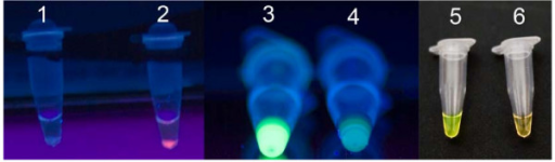 Visual detection of ERM-LAMP product. Using different naked eye detection methods: 1 = Negative control of ERM-LAMP reaction using Rox- labelled probe, there is neither pellet nor red fluorescence; 2 = Positive ERM-LAMP reaction using Rox- labelled probe, the pellet emitted red fluorescence; 3 = positive sample by using FDR, emitted strong green fluorescence when exposed to UV light; 4 = negative sample by using FDR, did not emitted strong green fluorescence under UV light; 5 = positive sample with green colour by using SYBR green I stain; 6 = negative sample with orange colour by using SYBR green I stain.