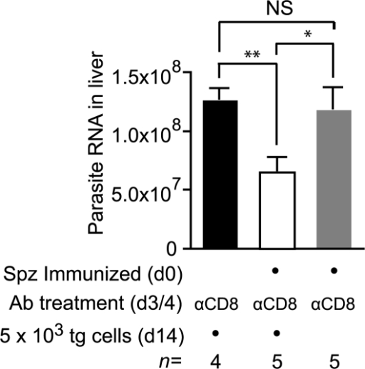 Cells primed weeks after immunization can inhibit parasite development.Two groups of mice were immunized with 3×104 irradiated sporozoites i.d. in the right ear on d0 and depleted of the endogenous CD8+ T cell response on days 3 and 4. Some of these mice received 2×103 transgenic cells on d14 (white bar) while others did not receive cells (gray bar). Naïve control mice were similarly depleted of CD8+ T cells on days 3 and 4 and received transgenic cells (black bar). All mice were then challenged on d21 and euthanized 40 hours later. Parasite burdens in the liver were measured by RT-PCR (mean ± SE, * = P<0.05, ** = P<0.01, data from one of two experiments shown).