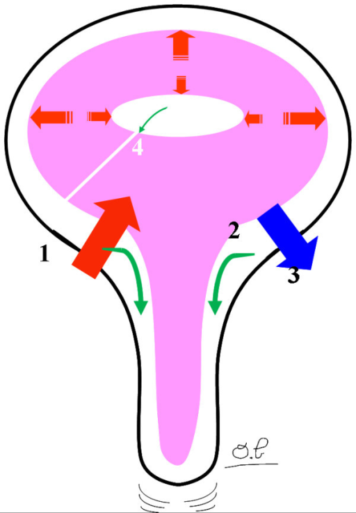 The dynamic interaction between the intracranial compartments. At the start of systole, an arterial volume suddenly flows into the cranium. This causes an immediate increase in the intracranial pressure (ICP). According to the Monro-Kellie doctrine, this increase in ICP is countered by a succession of flush flows through the venous and CSF compartments. The temporal coordination of these flush flows is now well documented and is organized according to the venous and CSF viscosities and flow resistances and brain compliance. The arterial peak flow (1) is first transmitted to the cervical CSF flow (2), the venous blood flow (3) and, lastly, the ventricular CSF flow (4).