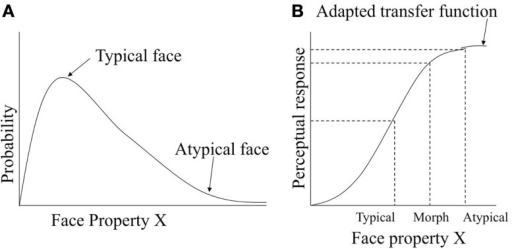 Information maximization account of atypicality bias. (A) Probability density function for typical and atypical faces. (B) Perceptual response for typical, atypical and the typical-atypical morph faces as predicted by adaptive transfer function.