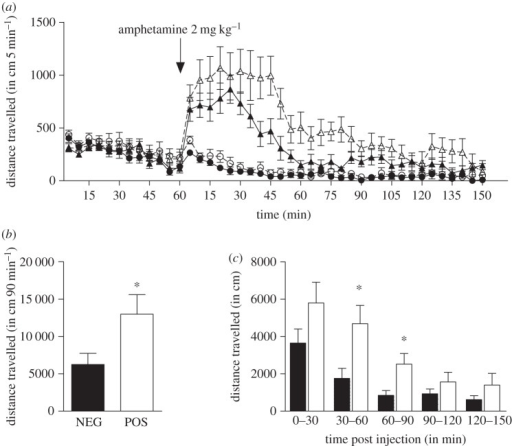 Response to acute amphetamine treatment. (a) Time course of locomotor-induced behaviour in response to an i.p. injection of 2 mg kg–1 amphetamine or saline solution in NEG (filled circles, vehicle (n = 8); filled triangles, amphetamine 2 mg kg–1 (n = 8)) and POS (unfilled circles, vehicle (n = 8); unfilled triangles, amphetamine 2 mg kg–1 (n = 7)) mice, expressed in distance travelled per 5 min blocks. (b) Cumulated distance travelled during the first 90 min after amphetamine treatment in NEG (n = 8) and POS (n = 7) mice. (c) Time course response to amphetamine of NEG (filled bars, n = 8) and POS (unfilled bars, n = 7) mice expressed in distance travelled per 30 min blocks. Data are presented as means ± s.e.m.; *p ≤ 0.05. Two-tailed Student's t-test was used.