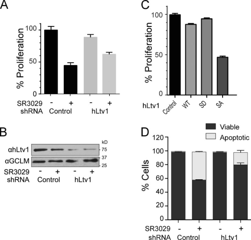 The essential function of human CK1δ is in ribosome maturation. (A) Cell proliferation (as determined by doubling times) of control MDA-MB-231 cells, or of MDA-MB-231 cells where hLtv1 was silenced by Dox-directed induction of hLtv1 shRNA for 3 d, before addition of 30 nM SR3029 or vehicle for another 3 d. (B) Western blot analyses established ∼80% depletion of Ltv1 after 3 d of Ltv1 knockdown. (C) Proliferation of MDA-MB-231 cells engineered to inducibly overexpress wild-type hLtv1, hLtv1-S/D, or hLtv1-S/A after Dox treatment for 3 d. (D) Annexin V/DAPI staining combined with FACS analysis of control MDA-MB-231 cells and those depleted of hLtv1 in the presence or absence of 100 nM SR-3029. All measurements in A, C, and D were done in triplicate, and error bars show the standard deviation of these data.
