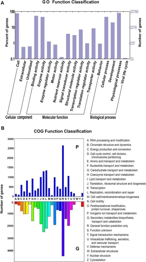 Function classification of unigenes. a, The gene ontology (GO) classification of P-type B. vulgaris transcripts; b, The comparison of clusters of orthologous groups of proteins (COGs) classification between P- and G-type transcriptomes