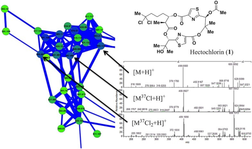 Hectochlorin (1) isotope pattern within the M. producens JHB network.The presence of 35Cl or 37Cl within specific hectochlorin molecules yielded different parent masses and fragment spectra. The species with both 35Cl atoms has an m/z of 665, the species with one 35Cl and one 37Cl atom has and m/z of 667, and the species with 37Cl atoms has an m/z of 669. Because of this the fragment spectra share only masses from those fragments without chlorine atoms, and those fragments bearing the chlorine atoms show the same mass differences as their parent masses.