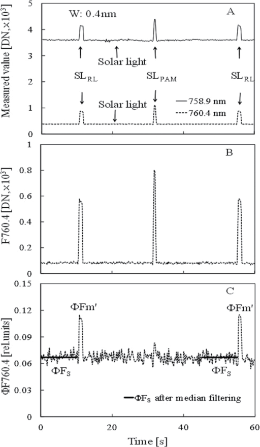 Measurement of Chl fluorescence using the FLD method under solar light and saturation pulse for estimating ΦPSII of paprika leaf. (A) Temporal changes in leaf radiant intensity spectra measured using a HR2000+ spectrometer under solar light (1450 μmol m−2 s−1), where SLRL is the saturation light pulse (4450 μmol m−2 s−1) using red laser (660nm) and SLPAM is the saturation light pulse (blue LED, about 10 000 μmol m−2 s−1) of JUNIOR PAM. The solid line is the spectra of 758.9nm and the dotted line is that of 760.4nm. A mean value of 0.4nm wavelength width (W) was used. (B) Temporal changes in Chl fluorescence intensity (F760.4) calculated by the FLD method. (C) Temporal changes in Chl fluorescence yield (ΦF760.4). The dotted line is the changes in ΦF760.4 and the solid line is the value after median filtering during the 10 s before the SLRL illumination for estimating ΦPSII.