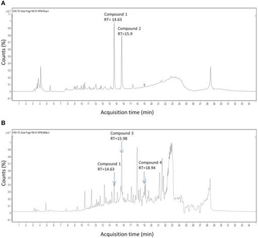 HPLC chromatograms of extracts derived from endophyte WF4. Shown are chromatograms when the endophyte was cultured on (A) rice medium and (B) millet medium. The arrows show the retention time of peaks exhibiting antifungal activity.